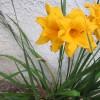 apts denver: apt flower