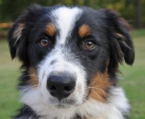 apts denver: doggy