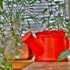 apts denver: house plants
