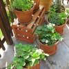 apts denver: container garden